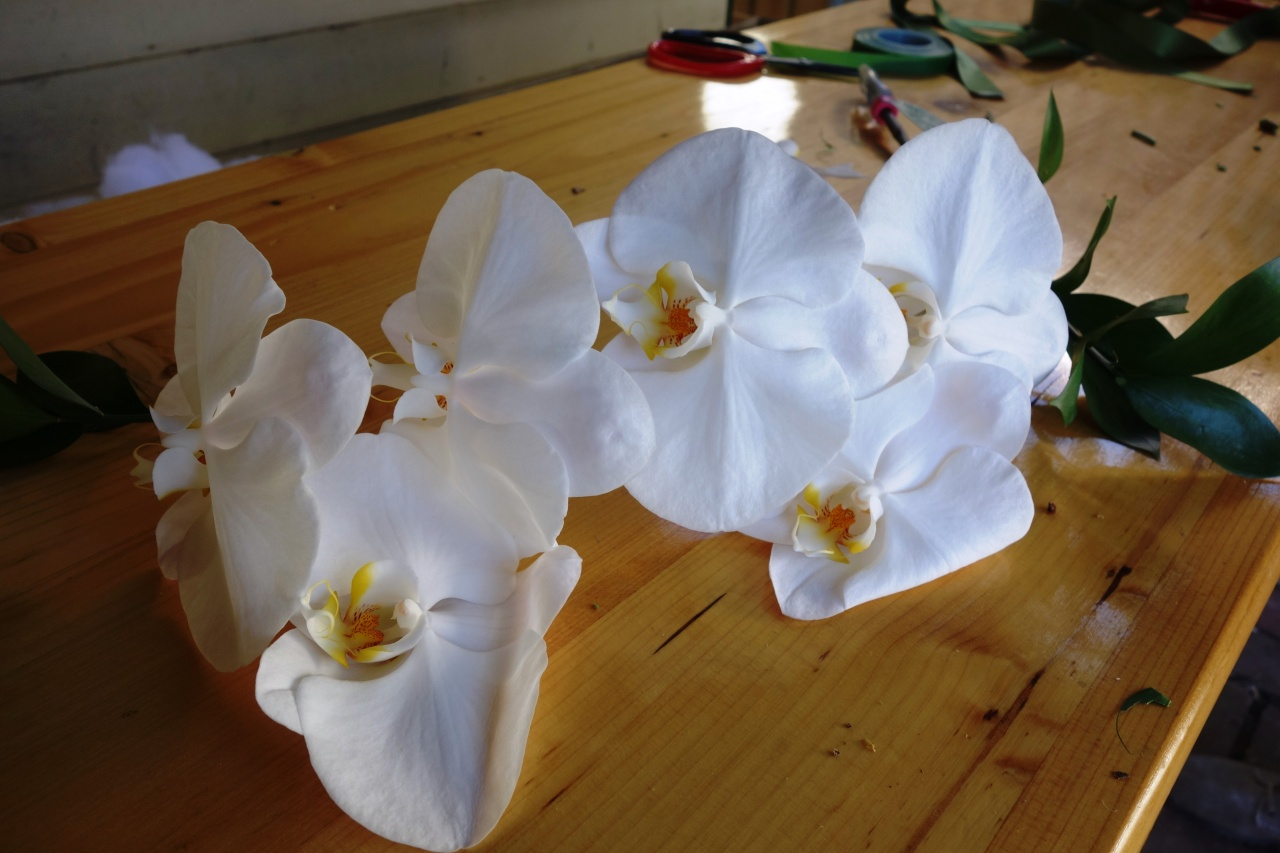 Phalaenopsis orchids in white being styled