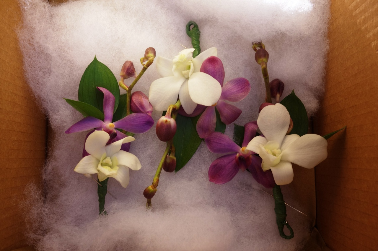 Singapore orchid buttonholes or boutonnieres