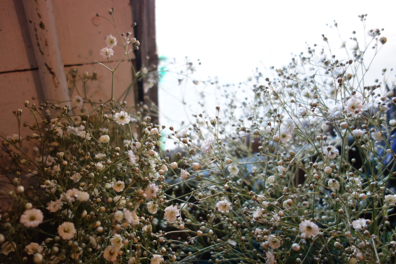 Preparing the babys breath