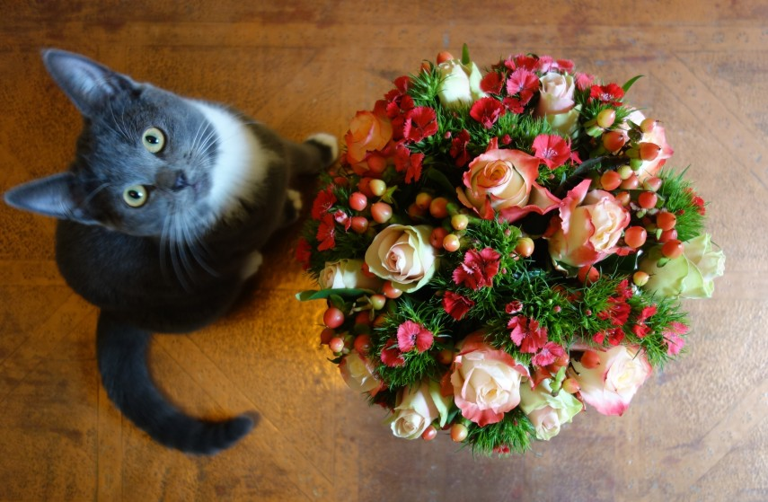 Spook & sweet william bouquet