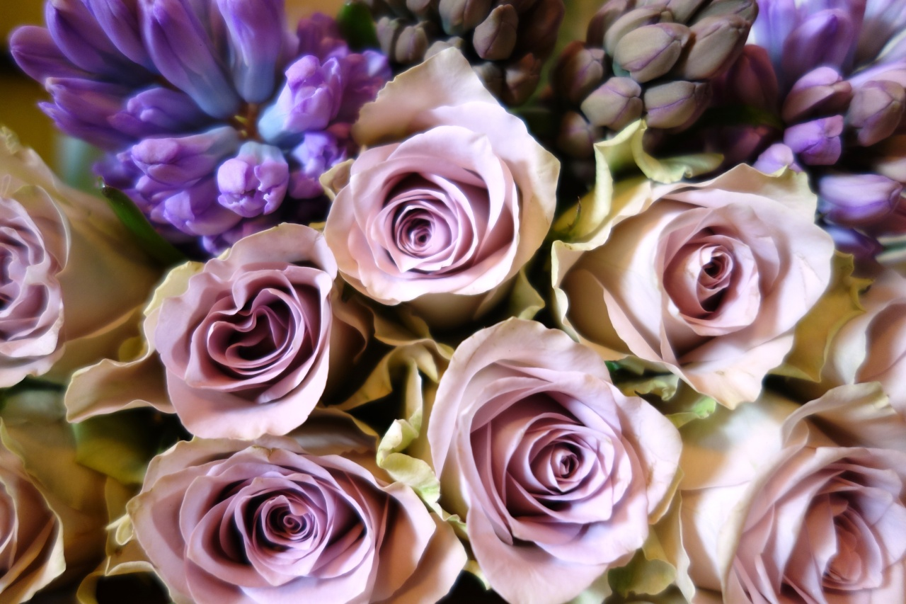 Roses bouquet close-up