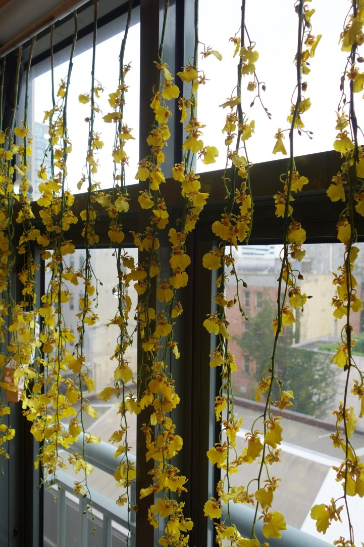 Dancing lady orchid curtain