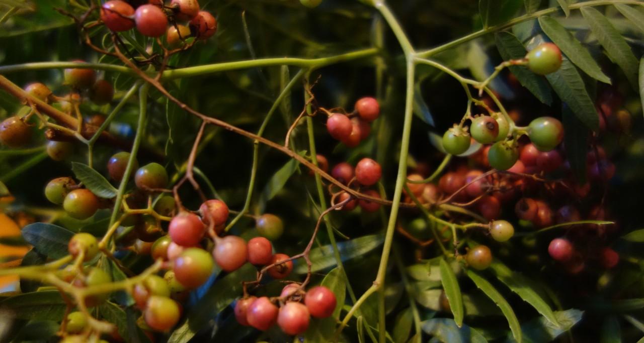 Peppercorn foliage