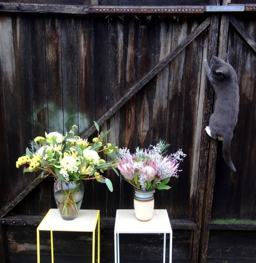 Spook (the photobomber) with native flower arrangements