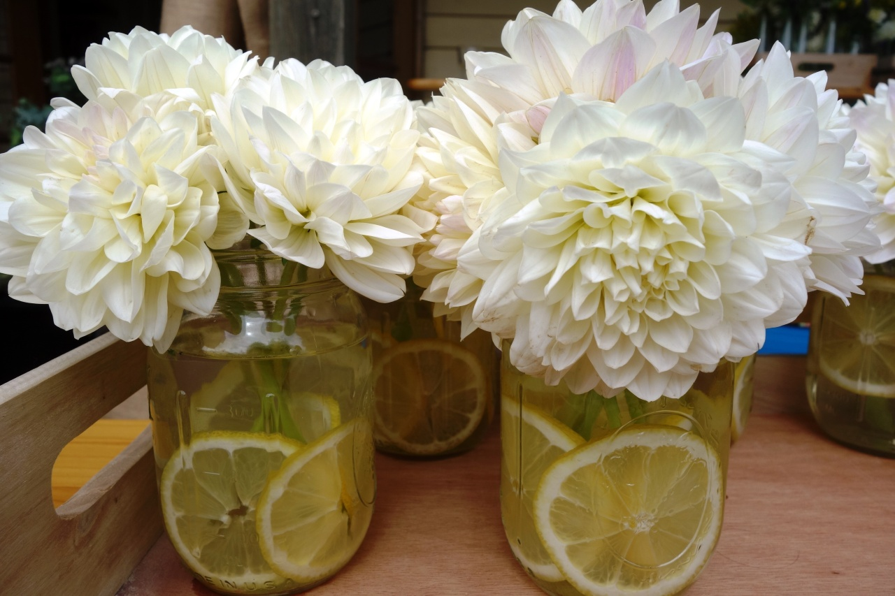 Dahlias and lemons in jars