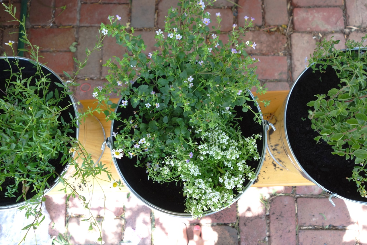 Herbs in buckets as decoration